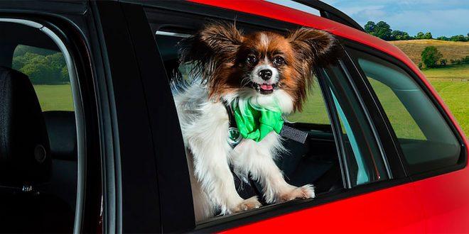 Hunder som blir etterlatt i varme biler lider. (Illustrasjonsfoto: Skoda)