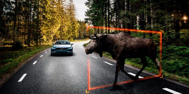 Nå vokser faren for å kollidere med et vilt. (Begge foto: Volvo)