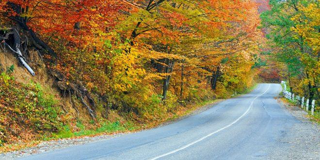Høst betyr også vanskelig kjøreforhold, så kjør forsiktig i tiden framover. (Foto: Trygg Trafikk)