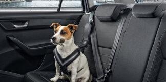 Skoda har mange smarte løsninger, og denne for hunder er blant de aller smarteste. (Fotos: Skoda)